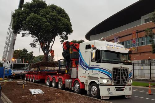 Large pohutakawa tree transplanted from Quay St to Mahuhukiterangi Reserve Auckland CBD